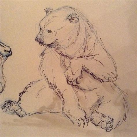 bear sketch ideas  pinterest bear drawing