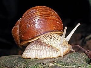 Mollusks: Fact or Fiction? | Britannica.com