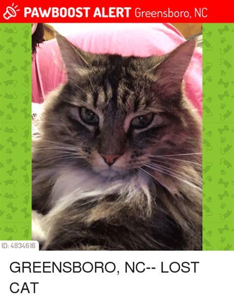 Lost Cat Meme - pawboost alert greensboro nc id 4834616 greensboro nc