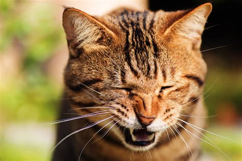 cat sneezing cats sneeze why nose stuffy breathing problem dogs symptoms respiratory funny hiccups webmd signs compilation sneezes kitty ref
