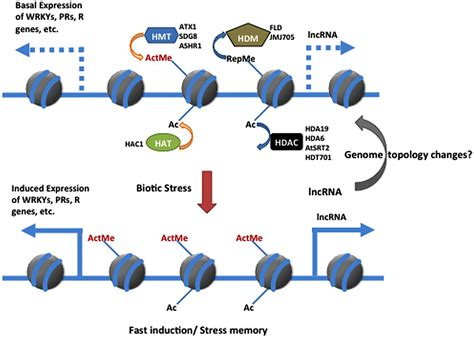 Modification Analysis Definition by Frontiers Chromatin Versus Pathogens The Function Of