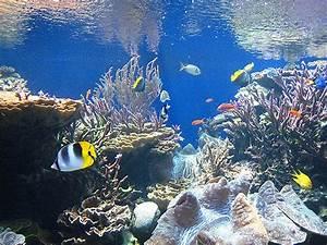 Fische Für Anfänger : fische f r kleine aquarien die welt der fische ~ Orissabook.com Haus und Dekorationen