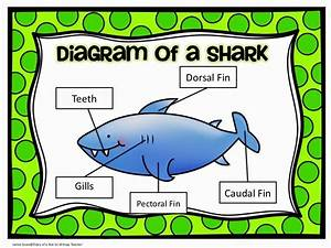 Diary Of A Not So Wimpy Teacher  Shark Week