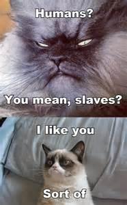 grumpy cats 10 cats even grumpier than grumpy cat