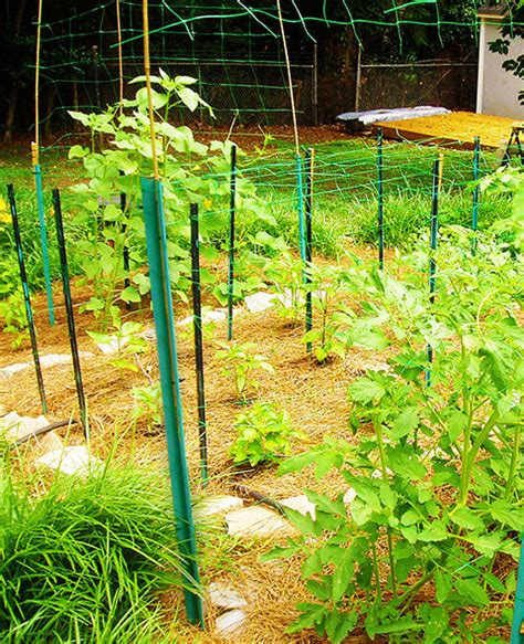 Trellis Netting by Trellis Netting For Climbing Plants To Optimize Growth