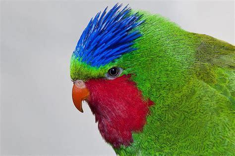 Crown Definition   Bird Anatomy