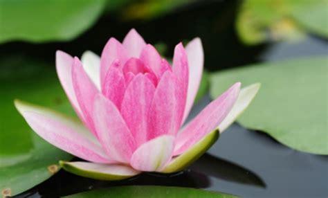 foto fiori bellissimi fiori bellissimi foto leitv