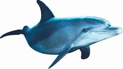 Dolphins Delphinus Swim Conserve