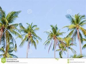 Coconut Tree Garden Stock Photo - Image: 59866766