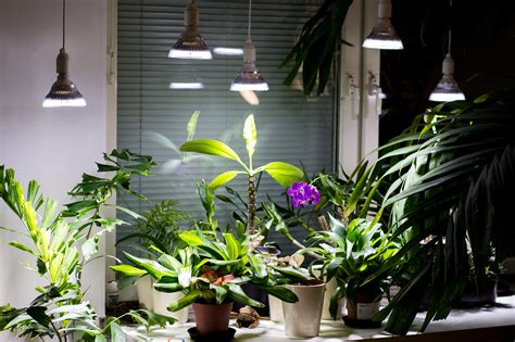 can you use a flood light to grow plants let it be light led grow lights led and cfl ls for