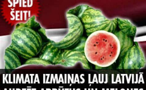Klimata izmaiņas ļauj Latvijā audzēt arbūzus un melones ...