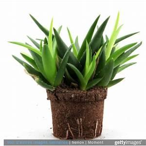 Arrosage Aloe Vera : des plantes dans la chambre une bonne id e enfant ~ Nature-et-papiers.com Idées de Décoration