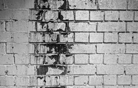 dangers  black mold  basements