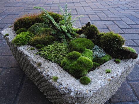 gardening moss moss dish gardens moss and stone gardens