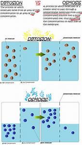 Osmosis Vs Diffusion By I