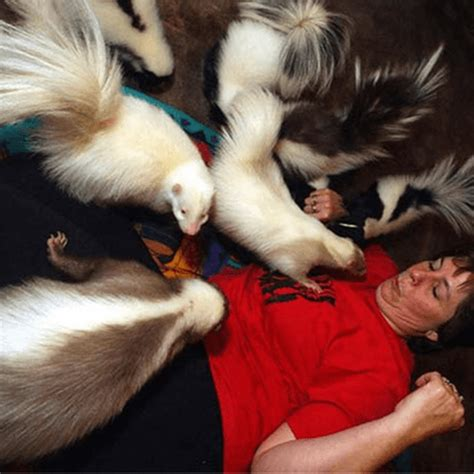 get rid of skunk smell how to get rid of skunk smell in house how to get rid of stuff