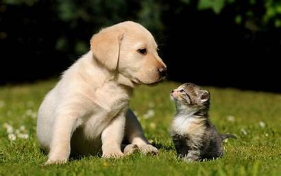 Puppy Wallpapers Kitten Cave