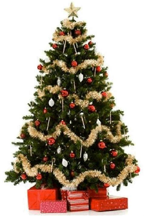 origen ancestral del 193 rbol de navidad rafael bravo