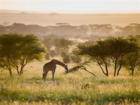 Best Tours In Africa  National Geographic Traveler