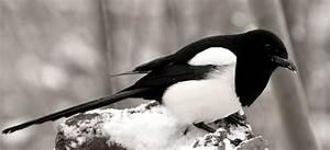 Mettre Twitter En Noir : en noir et blanc photo et image animaux animaux sauvages oiseaux images fotocommunity ~ Medecine-chirurgie-esthetiques.com Avis de Voitures