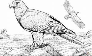 Disegno di Aquila calva americana da colorare Disegni da