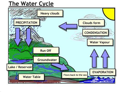 week  cycles nitrogen oxygen mrbordens biology rattler