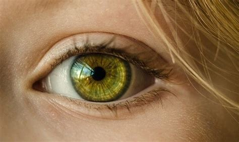 hazel eyes learn  people  greenish eye color  rare guy counseling