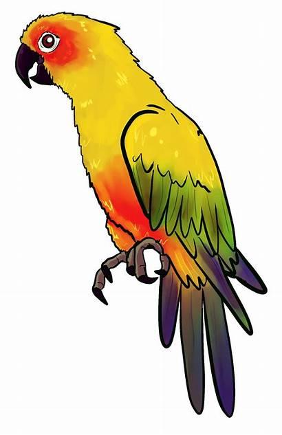 Parrot Drawing Yellow Clipart Pet Kacer Burung