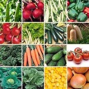 Vegetable seed production in Pakistan | Bolta Karachi