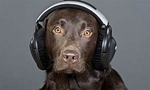I always knew my dog was musical | Life and style | The ...