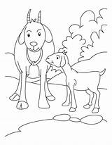 Goat Coloring Goats Kid Boer Mother Farm Pygmy Drawing Animals Sheet Animal Printable Sheets Colouring Line Bestcoloringpages Clipart Getdrawings Wolf sketch template