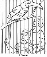 Zoo Coloring Animals Printable Animal Birds Sheets Bird Activity Toucan Cage Colouring Sheet Zoos Children Exhibit Cages Going Honkingdonkey Wild sketch template