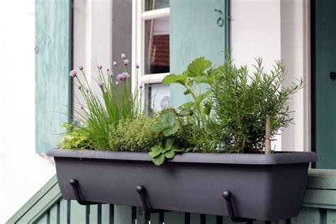 Was Passt Zu Lavendel Im Blumenkasten by Kr 228 Uter Im Balkonkasten Ziehen 187 Drei Leckere