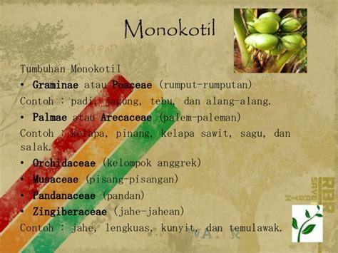biologi dunia tumbuhan plantae