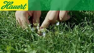 Traitement Mauvaise Herbe : mauvaise herbe pelouse rampante affordable entretenir sa pelouse au qubec with mauvaise herbe ~ Melissatoandfro.com Idées de Décoration