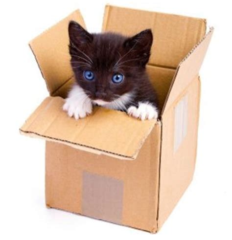 Image result for box of kittens images