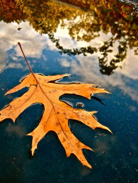 jeffrey rivkins point  view  agawam results  day  winner   annual fall photo