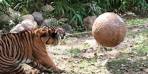 Animal Enrichment | Smithsonian's National Zoo