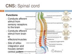 Central Nervous System Function