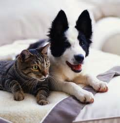 dogs cats cat and photos xemanhdep photos awesome pictures gallery