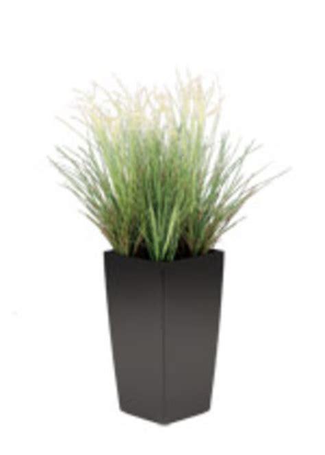 plante gramin 233 e artificielle d ext 233 rieur contact maxiburo