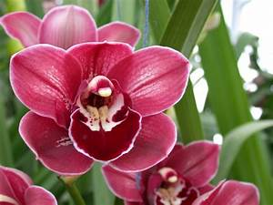 Different types of orchids! - ThingLink