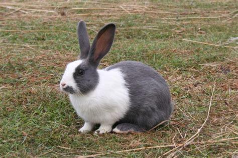 Māj dzīvnieki | ingussjelisejevs