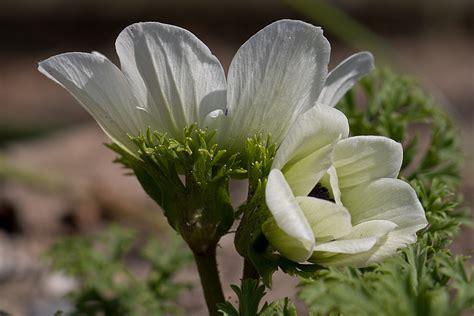 Kleine Weiße Blume Foto & Bild  Pflanzen, Pilze