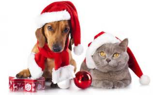christmas pets waiting for santa gifts wallpaper dreamlovewallpapers