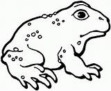 Toad Coloring Pages Frog Printable American Mario Template Google Toads Cane Clipart Designlooter Toadette Drawings Templates Getcoloringpages Nintendo Photobucket Bestcoloringpagesforkids sketch template