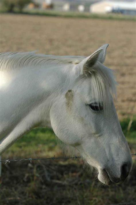 domestic horse animals wild wildlife aw creatures robertson