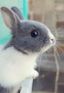 El Blog de Paopayu: Cuidados del conejo doméstico + ¡107 ...