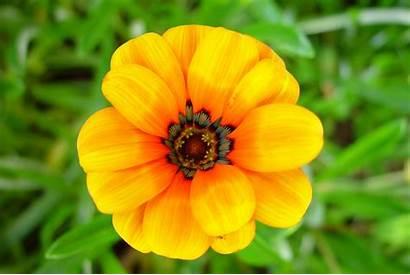 Flowers Plants Marigold