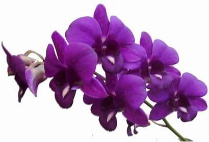 Purple Flower Flowers Transparent Frame Background Violets